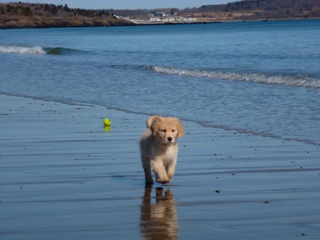 Toullie @ The Beach